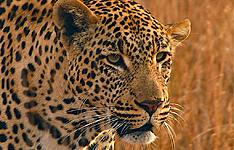 Du Cap au Parc Kruger, version charme