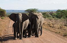 Safari Gourma