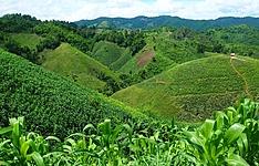 Le Nord montagneux - Extension Khao Sok Hors des sentiers battus
