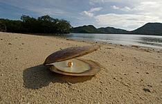 Perles dorées de Palawan et joyaux de Bohol
