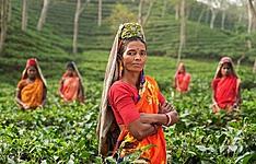 Darjeeling, immersion dans les communautés