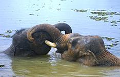Extension à Bardia : Safari au Népal