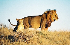 Moringa,inspiration Namibienne